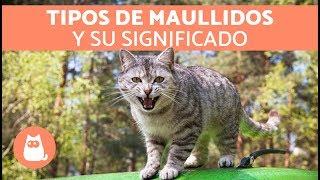 Maullidos de los gatos y su SIGNIFICADO