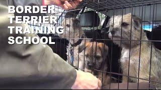 Border Terrier Training School Pt 2 (very Unofficial)