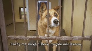 Nakarm psa z OLX - dzień z życia w schronisku