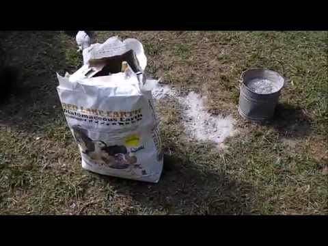 Diatomaceous Earth Wood Ash For Chicken Lice And Mites