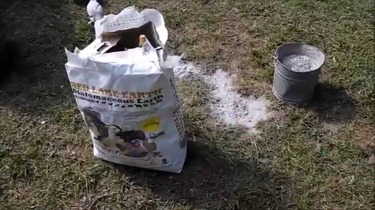 diatomaceous earth u0026 wood ash for chicken lice and mites youtube