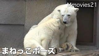 Polar Bear cub is hungry. Polar Bear Cub was born on December 21, 2...