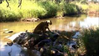 Volunteering with Lions in Victoria Falls