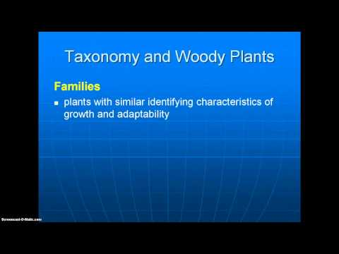 47003 Taxonomy  and Woody Plants - 1