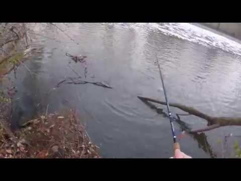 Cuyahoga River Fishing - caught a steelhead - Akron, OH 12/4/2015