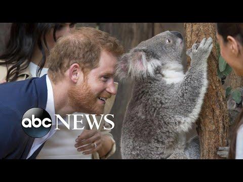 Harry, Meghan celebrate baby  in Australia
