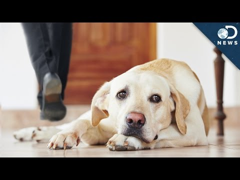 Your Dog Forgets You When You Leave