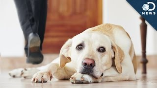 Repeat youtube video Your Dog Forgets You When You Leave