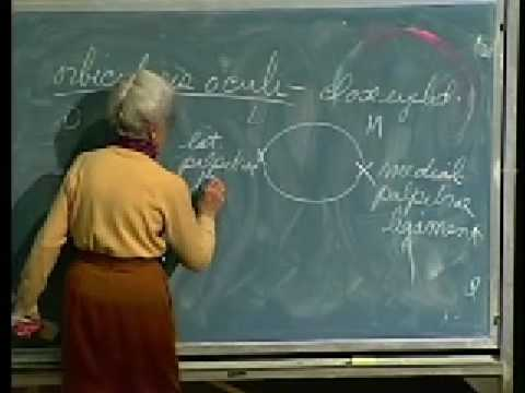 Integrative Biology 131 - Lecture 08: Skeletal System,... - YouTube