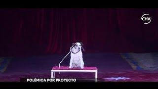 Uso de animales en los circos: Polémica por rechazo en el Senado - CHV NOTICIAS