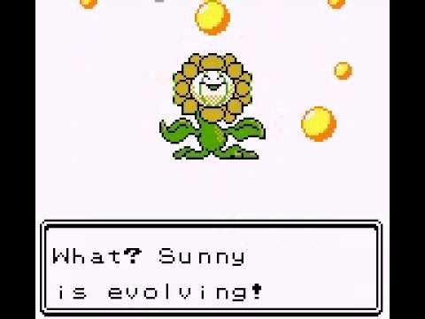 Sunkern evolves into Sunflora - YouTube