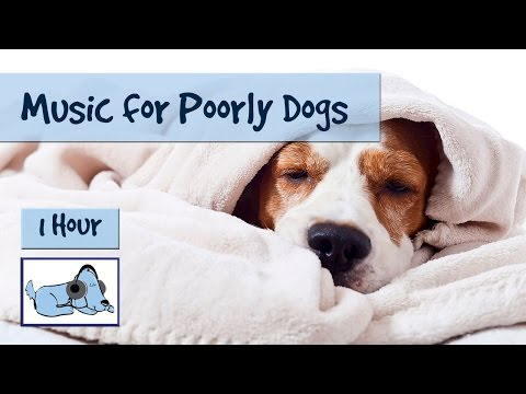 Music for Poorly Dogs, Dogs Suffering with Kennel Cough and Similar Illnesses 🐶 #POORLY09