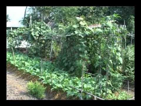 แนวการปฏิบัติเกษตรพอเพียง คุณลุงทองเหมาะ (ปราชญ์ชาวบ้าน ปี 2549)