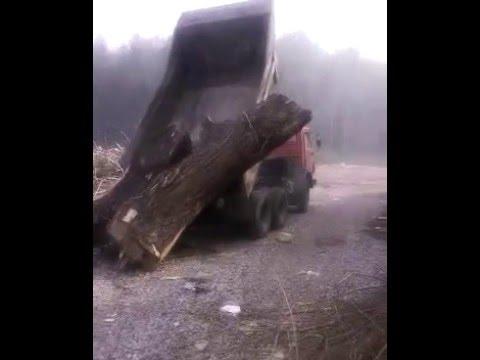 Камаз 5511 вываливает большое дерево / Kamaz 5511
