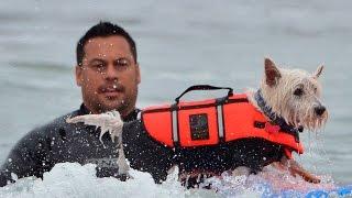 Behaviorist Tony Nila On Surf Dog Training