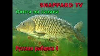 Русская рыбалка 4 Охота на сазана 200 лайков болонка Liner 600(8.5 кг) РОЗЫГРЫШ НАЖИВКИ И БЛЕСЕН