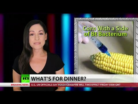 It's happening: GMO corn no longer resists insects