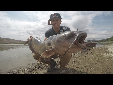 Night Fishing For Catfish - Snake River Catfishing Day 2
