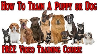 How To Train A Puppy ♥ FREE VIDEO COURSE ♥  How To Train A Dog ♫ ♫ ♫