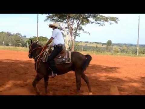 Curso de Rédeas - Jaime Bardi Filho - Sindicato Rural - São Jorge do Patrocínio.