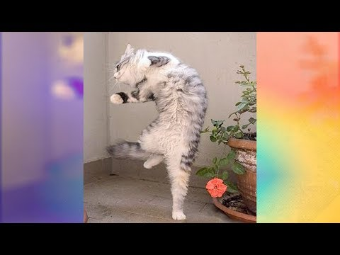 Funniest Cats Dancing to Music