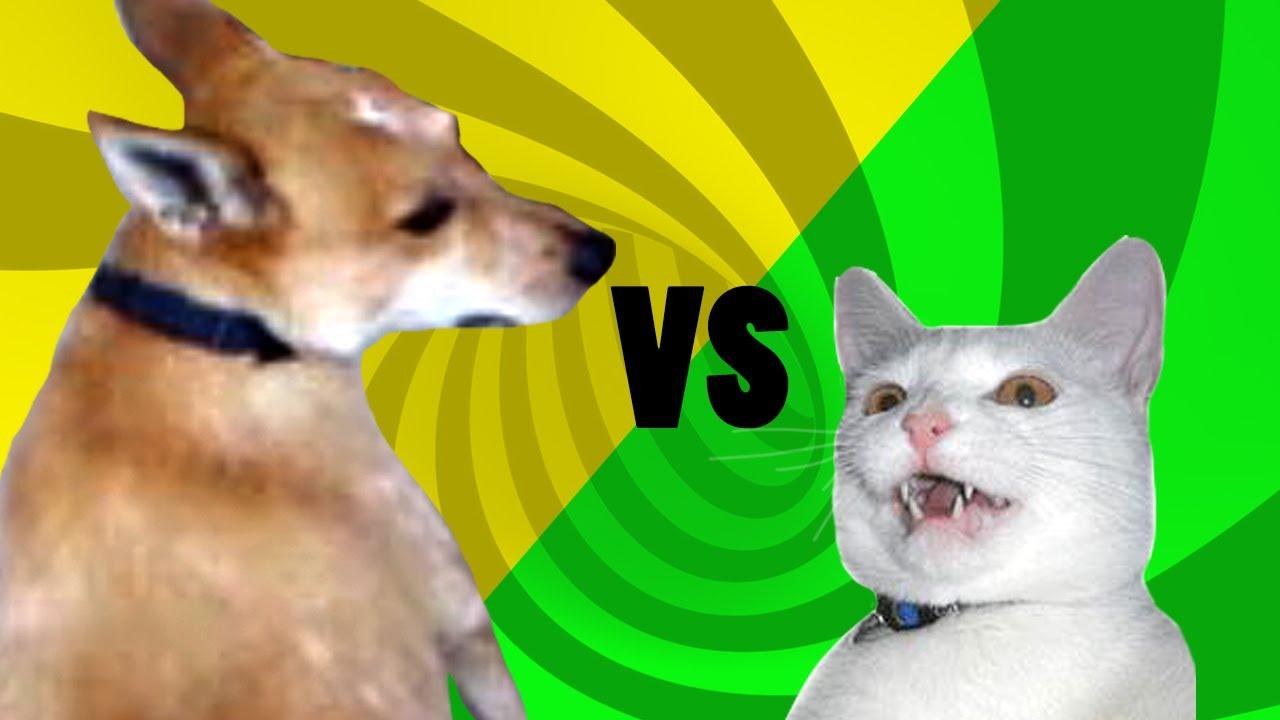 Talking Cat Dog