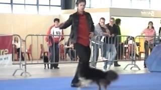 Glay et Plinio - Dog Dancing - 2er Tour.