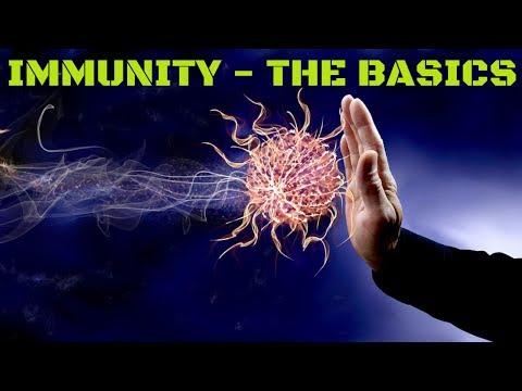 Immunology Basics - Innate vs Acquired Immunity