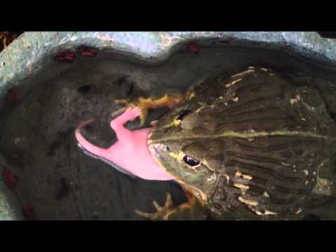 Feeding my reptiles/amphibians  ( minecraft )