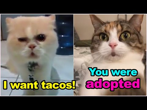 These Cats Can Speak English Better Than Hooman ? Cat Came To Mexican Restaurant and Ordered Tacos