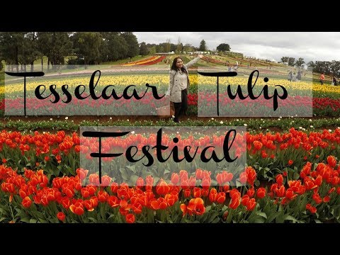 Panen Tulip di Tesselaar Tulip Farm Melbourne