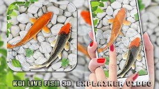 Fish Live Wallpaper 2018: Aquarium Koi Backgrounds By Deeko Games Explainer Video