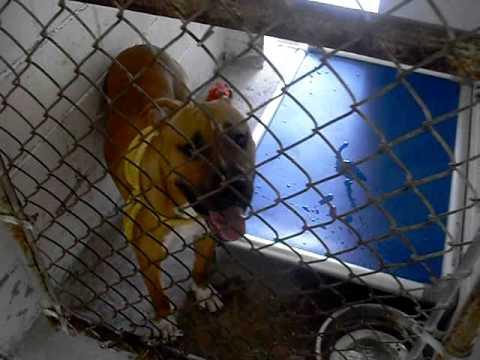 Brevard County Animal Shelter in Melbourne,FL - South Animal Care Center
