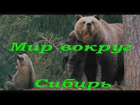 Природа и животные Сибири - Видео онлайн