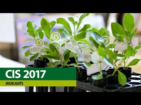 CIS Conference 2017 – Highlights