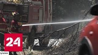 Смотреть видео Пиренейская жара: Европе угрожают пожары и нашествие ос - Россия 24 онлайн
