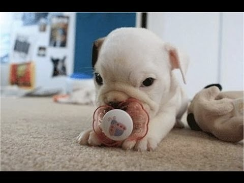 'Puppies With Pacifiers Compilation' || CFS