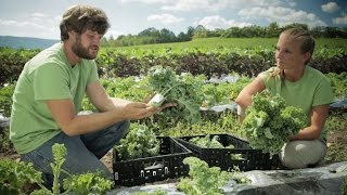 Wegmans Organic Farm: Kale