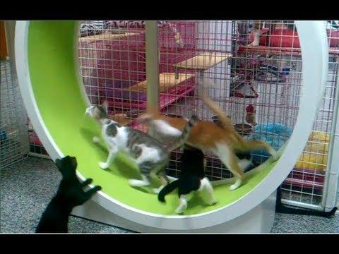 Thumbnail for Cat Video Cheezburger : Cat Wheel