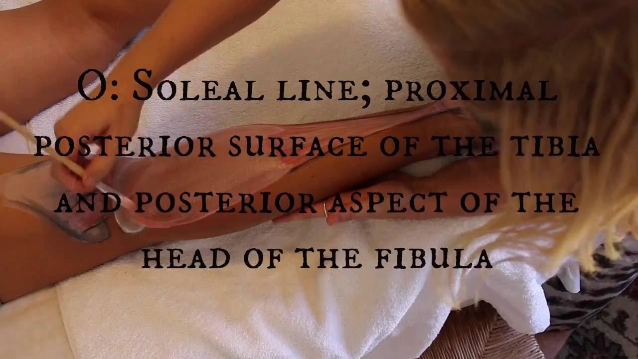 Anatomy Tutorial: The SOLEUS - YouTube
