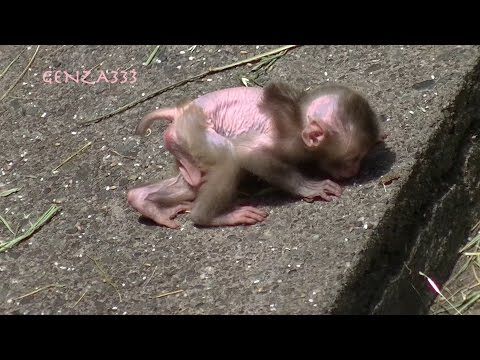 baby monkey Videos Compilation : cute animal