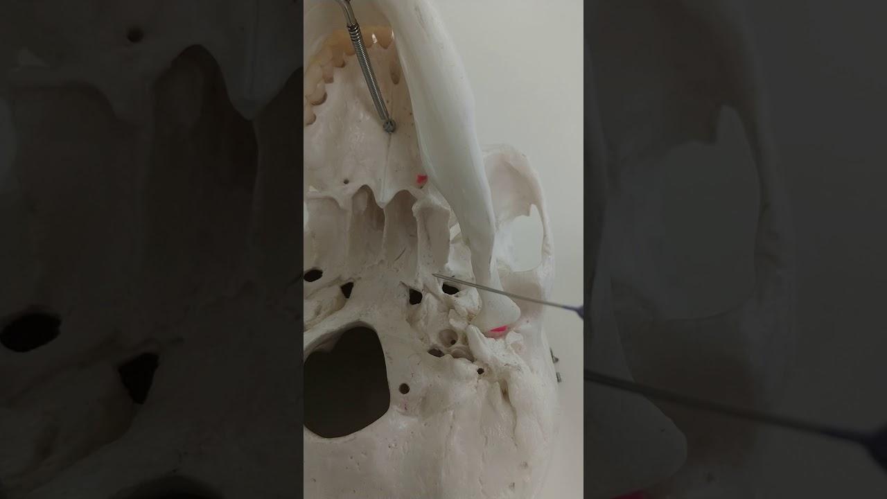 Foramenes base de cráneo. Resumen laboratorio - YouTube