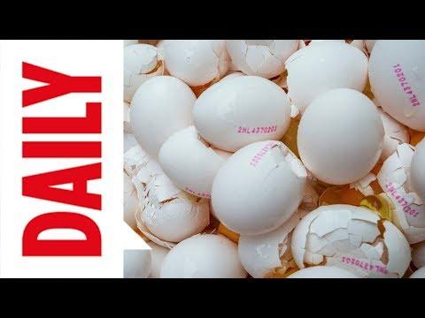 Millionen Eier vergiftet: Die wichtigsten Antworten zum Lebensmittel-Skandal | BILD DAILY 4.8.17