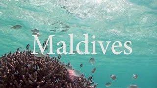 モルディブで泳ぐと、こんな世界が待っている。サンゴ礁に群がるデバス...