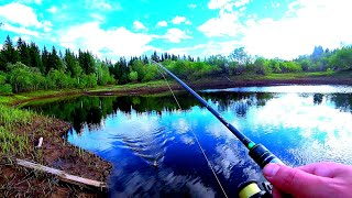 Рыбалка на спиннинг на таёжной речке Рыбы много но