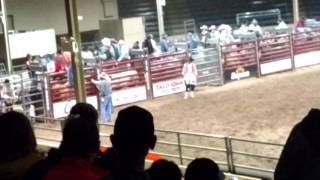 Holy Cow  Rodeo   deadbrook606