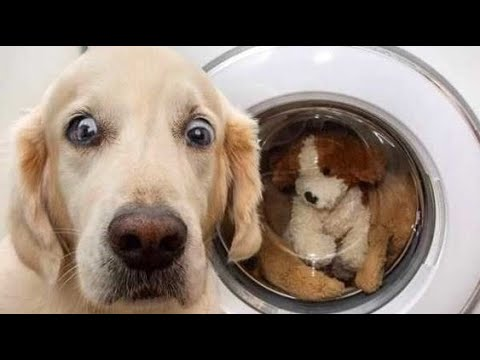 """Awesome Funny Animals' Life Videos - Funniest PetsFunniest Animals ? -"