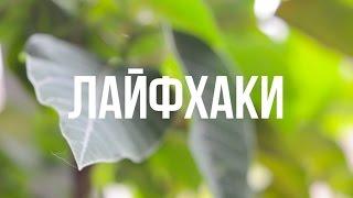 ТОП 10 КРУТЫХ ЛАЙФХАКОВ С ЕДОЙ!