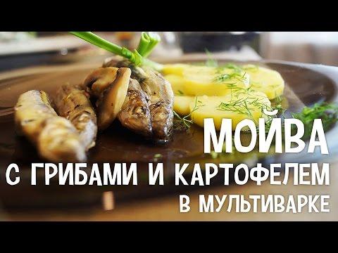 Мойва с грибами и картофелем в мультиварке. Рецепты мойвы в мультиварке