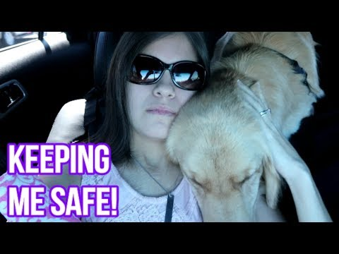 🐕 Service Dog Alerts To Fainting Spell on Road Trip! 😵🚘 (2/17/18)